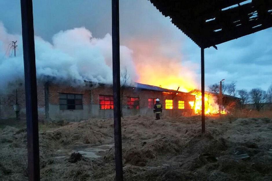 W Kwiecewie ogień z podpalonych balotów przeniósł się na budynek inwentarski.