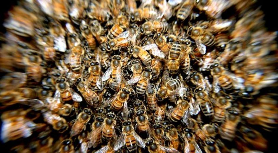 Copa i Cogeca chwalą nową strategię w sprawie pszczół przyjętą przez posłów PE