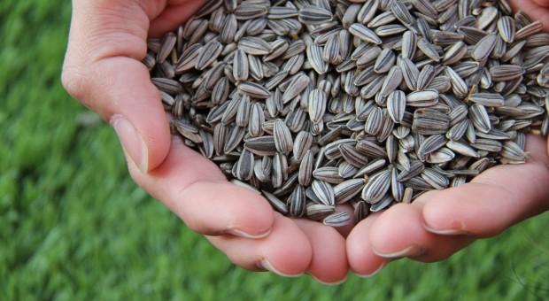 Rosja potrzebuje importu nasion