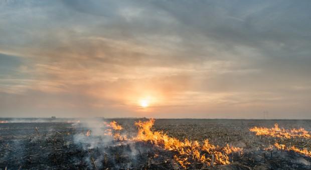 Wraca problem wypalania traw - strażacy apelują o rozsądek
