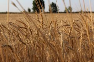 Kazachstan: Zaostrzenie zasad dzierżawy gruntów