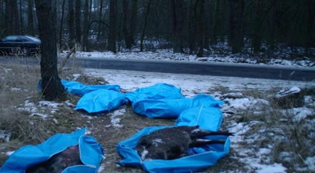 Dziki porozrzucane w workach w okolicach Parczewa