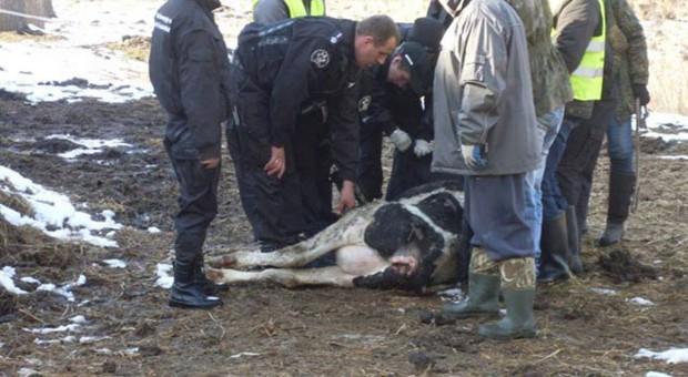 Dwa i pół roku więzienia za okrucieństwo wobec zwierząt
