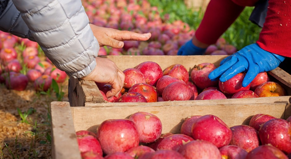 Rząd przyjął projekt ustawy ws. umowy o pracę pomocnika rolnika
