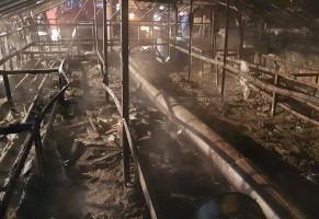 Płomienie strawiły wyposażenie szklarni, ale strażacy uratowali rozsady warzyw.