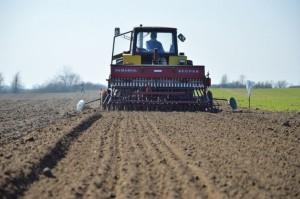 Nie ma paniki w zaopatrzeniu w materiał siewny zbóż jarych