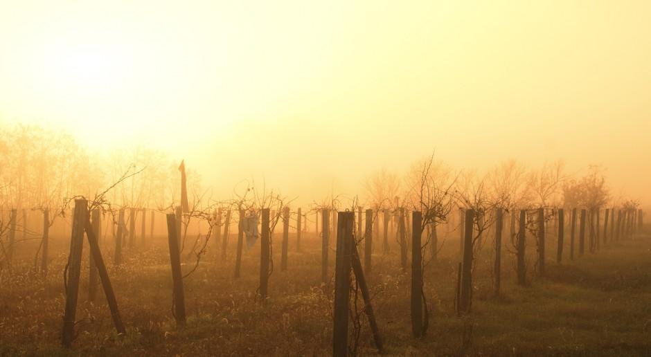 Słynne winnice Napa Valley w płomieniach