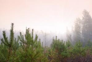Podkarpackie: Blisko 15 mln sadzonek trafi do lasów