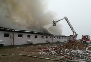 W pożarze chlewni spłonęło ponad trzy tysiące świń