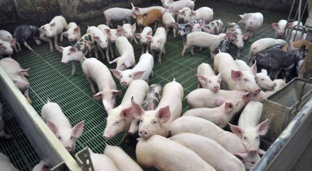 MRiRW odpowiada na postulaty branży mięsnej