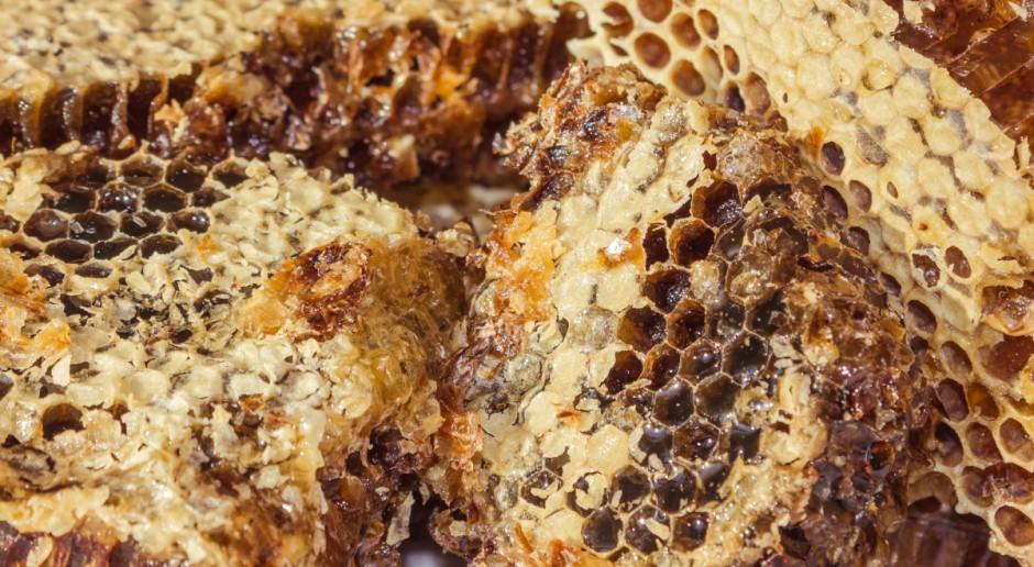 Nowy trend w pszczelarstwie - oddychanie powietrzem z ula