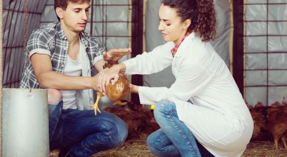 NIK: Rośnie ilość antybiotyków stosowanych w hodowlach zwierząt