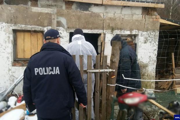 Nielegalnie utrzymywane świnie w jednym z gospodarstw