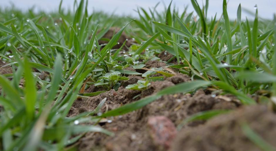 Wymagania herbicydów względem temperatur