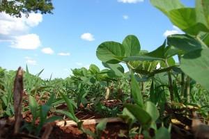 KE prosi o opinie na temat sytuacji w sektorze białek roślinnych
