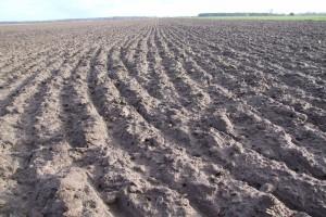 Nawożenie fosforem i potasem pod zboża jare