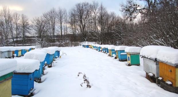 Podkarpackie: Pszczoły w dobrej kondycji