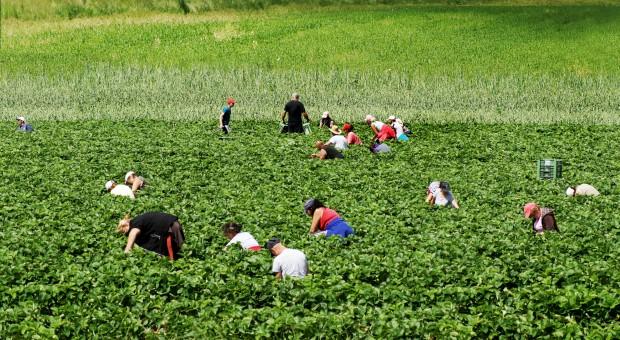 Śledczy: Bunt motywem zabójstwa Polaka w gospodarstwie w Apulii