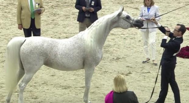 Sukces koni z Michałowa na Bliskim Wschodzie