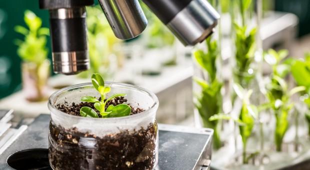 Resort rolnictwa podjął działania, by odbudować znaczenie polskiej hodowli roślin
