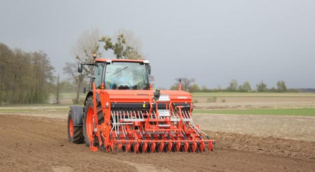 Parametry siewu zbóż jarych – unikaj błędów na tym etapie