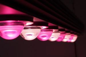 Polskie lampy LED dedykowane ogrodnictwu