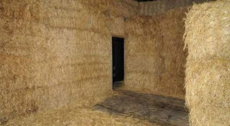 Rolnik trafił za kratki za ukrywaną w belach słomy uprawę