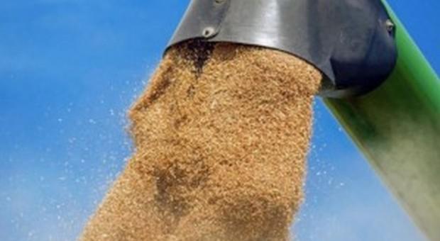 Rosja: Eksport rolno-spożywczy w 2017 r. wzrósł o 21,1 proc.