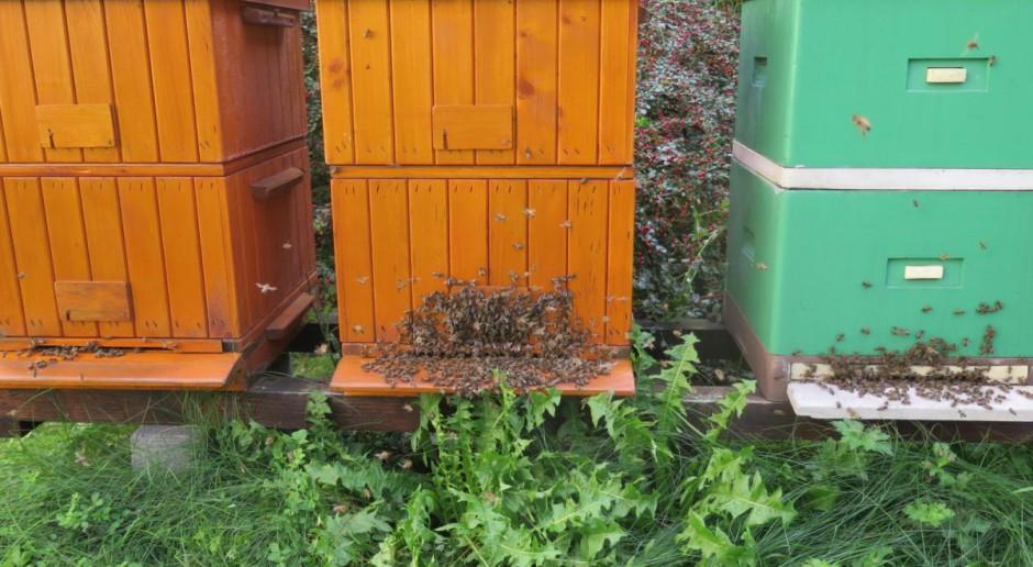 Mieszanka nasion rolniczych przyjazna pszczołom – bezpłatnie dla rolników