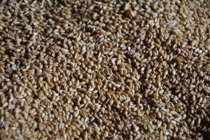 Koniec marca to nadal spokój w skupach zbóż