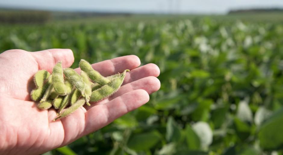 Rosja: Wzrosły potencjalne możliwości eksportu soi