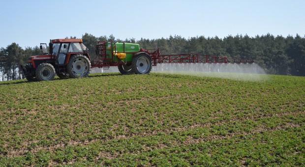 Skuteczność fungicydów w zwalczaniu suchej zgnilizny kapustnych w rzepaku