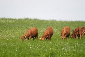 Jakie są zalety dolistnego nawożenia traw?