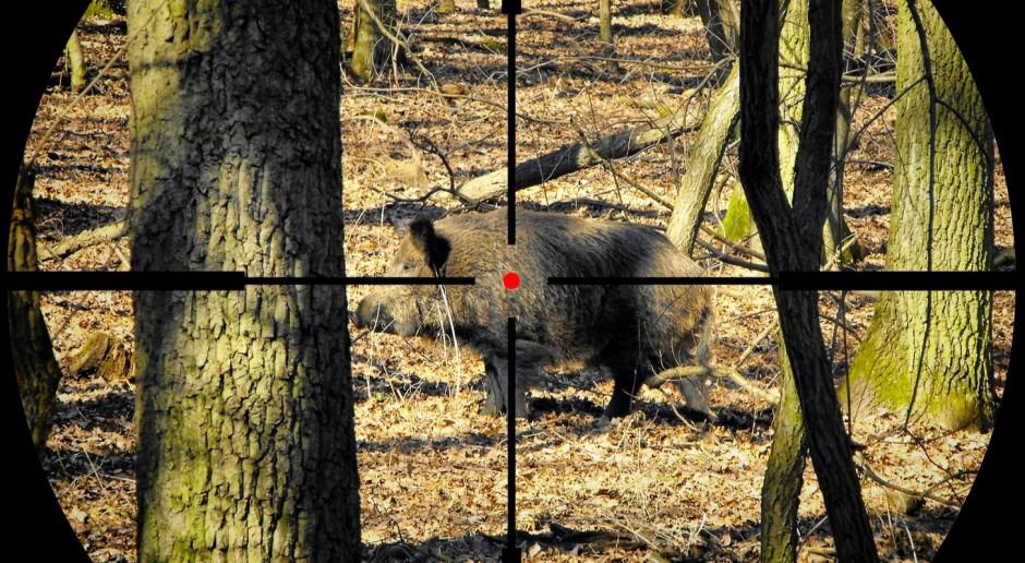 Słowacja: W związku z ASF myśliwych wezwano do odstrzału dzików