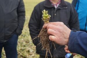 Stan upraw ozimych w południowo-zachodniej Polsce – nie jest źle