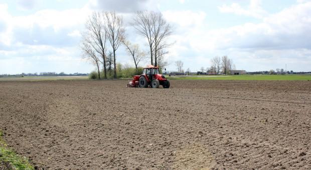 Fosfor i potas pod kukurydzę