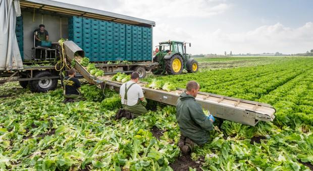 MRPiPS zaniepokojone praktykami holenderskich agencji pracy tymczasowej