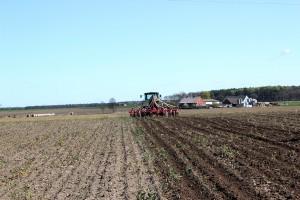 Dlaczego warto w kukurydzy stosować nawożenie zlokalizowane?