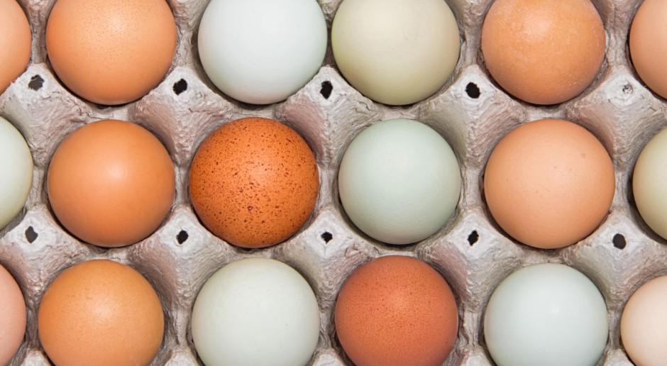 Kolor skorupki i żółtka nie wpływa na jakość jaja