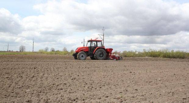 Ile azotu pod kukurydzę?