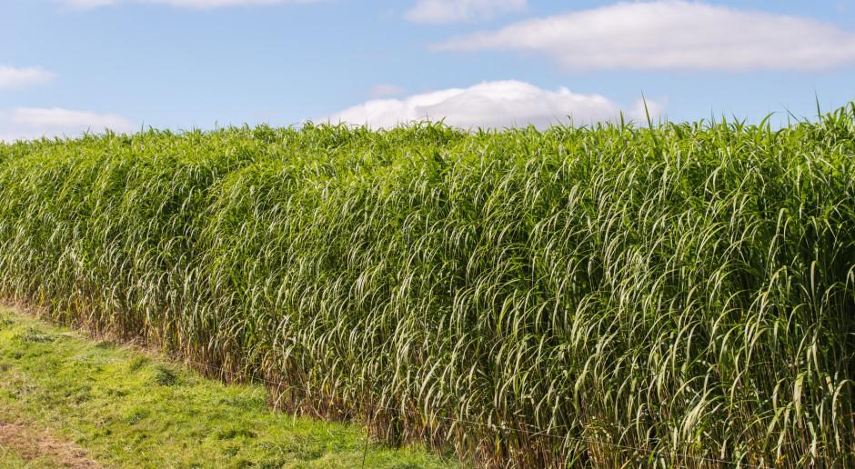Poprzemysłowe nieużytki i grunty słabej jakości pod uprawy roślin energetycznych