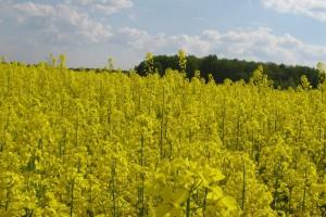 Powstała Polska Koalicja Biopaliw i Pasz Białkowych