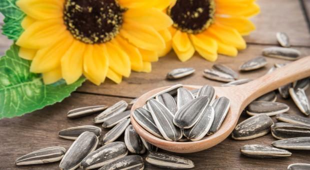 Kazachstan zwiększył eksport nasion roślin oleistych