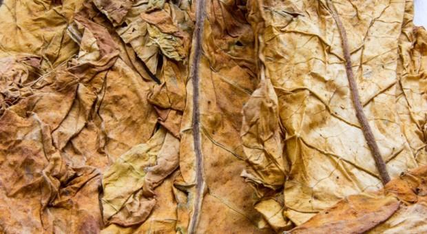 Zlikwidowano nielegalną krajalnię tytoniu