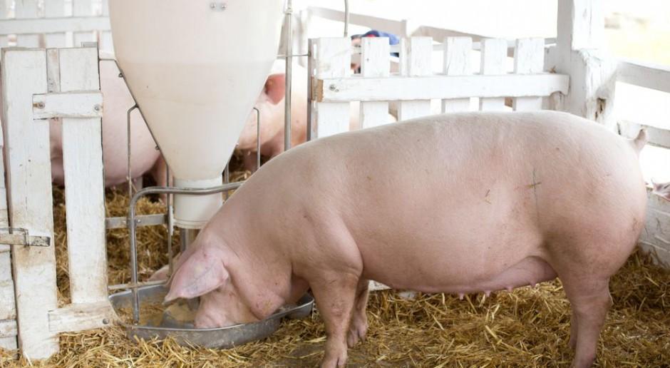 Nad czym pracują firmy hodowlane?