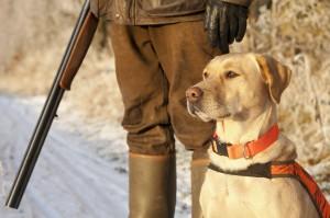 PZŁ: W 2018 roku nie będzie prób i konkursów psów używanych do polowań na dziki