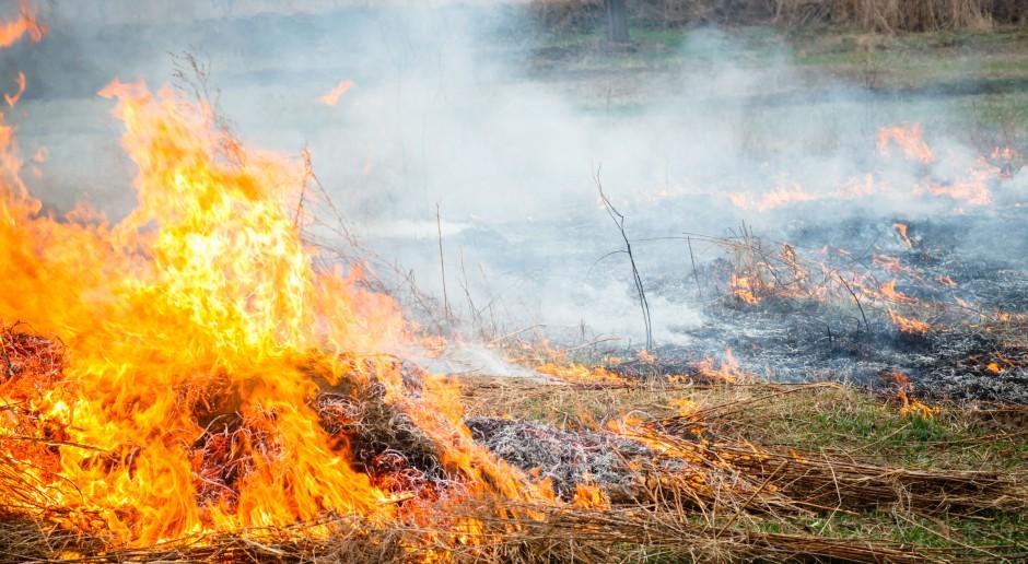 Pożar w Małopolsce, strażacy apelują o niewypalanie traw