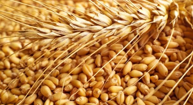 Ukraina: Mniejszy eksport zbóż