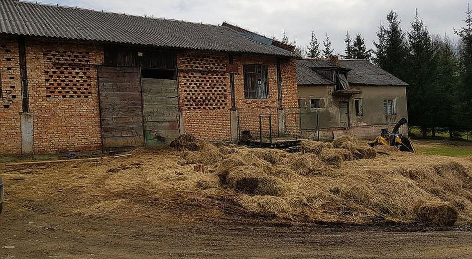 Cztery martwe konie znalezione w gospodarstwie. Jeden zamarzł… w styczniu
