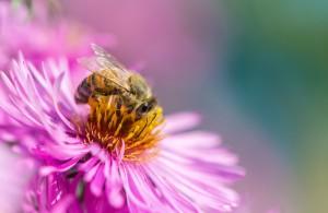 Preparat na chorobę pszczół na rynku za kilka miesięcy